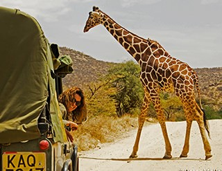 Boutique Safaris, conservation, safaris, african safaris, wild safaris, wildlife safaris, Elephant Watch Portfolio, Nairobi, Kenya, popular destinations, safari itinerary, itinerary, popular itineraries, road trips, safari vehicle, driver guide, wildlife guide