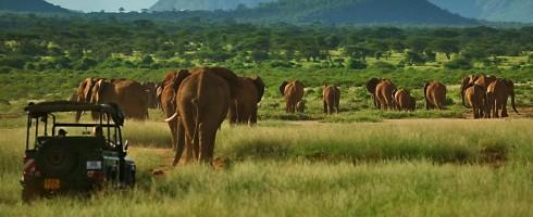 Elephant Watch Camp, activities, experience, Samburu National Reserve, game drives, wildlife, wild safaris, safaris, wildlife safaris, elephants, Elephant Watch Portfolio, conservation, Nairobi, Kenya