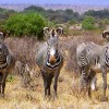 Elephant Watch Camp, landscape, National reserve, wildlife protected area, camp, wildlife in camp, Big Five animals, wild safaris, wildlife safaris, Samburu National Reserve, Elephant Watch Portfolio, conservation, Nairobi, Kenya, experience, landscape, wild animals, grevy zebra