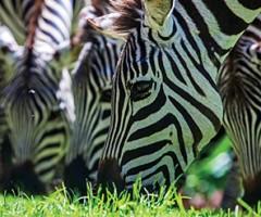 Accommodation, Olerai House, Olerai, Naivasha, Sanctuary, wildlife, Elephant Watch Portfolio, Nairobi, Kenya