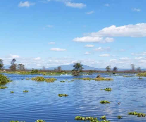 Olerai, Olerai House, Naivasha, sanctuary, Lake Naivasha, Elephant Watch Portfolio, Nairobi, Kenya, Great Lakes, Great Rift Valley, wildlife, wildlife in sanctuary, wild safaris, wildlife safaris, conservation, wildlife conservation, water