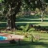 Olerai, Olerai House, Naivasha, sanctuary, Lake Naivasha, Elephant Watch Portfolio, Nairobi, Kenya, Great Lakes, Great Rift Valley, activities, experience, wild safaris, wildlife, Big Five, wildlife safaris, swimming pool, impala, swimming, pool