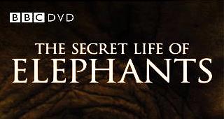 Secret Life of Elephants, BBC Film, BBC, Saba Douglas-Hamilton, Film, DVD, Northern Kenya, elephants, Elephant Watch Camp, wild safaris, wild safari, wildlife safari, conservation, Elephant Watch Portfolio, Nairobi, Kenya