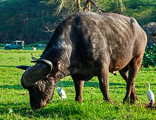 Olerai, Olerai House, Naivasha, sanctuary, Lake Naivasha, Elephant Watch Portfolio, Nairobi, Kenya, Great Lakes, Great Rift Valley