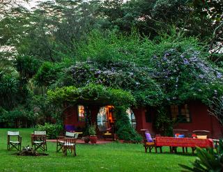 Olerai House, Naivasha, Zebras, Elephant Watch Portfolio, Nairobi, Kenya, wild safaris, wildlife safaris, wildlife, safaris, conservation