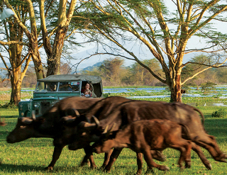 experience, activities, Olerai, Naivasha, wildlife, Elephant Watch Portfolio, Nairobi, Kenya