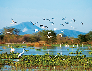 experience, Lake Naivasha, Great Lakes, Olerai, Naivasha, wildlife, Elephant Watch Portfolio, Nairobi, Kenya