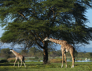 experience, the sanctuary, Olerai, Naivasha, wildlife, Elephant Watch Portfolio, Nairobi, Kenya