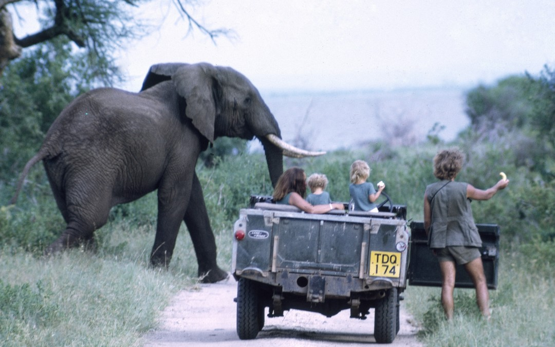 6.1973 Mara in Manyara National Park being introduced to elephants by her parents
