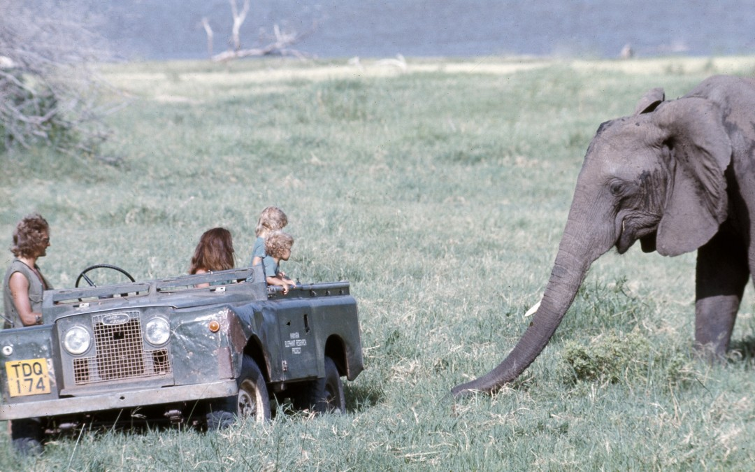 8.1973 Mara in Manyara being introduced to  Virgo the elephant by her parents