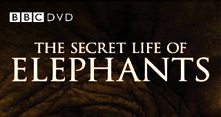 Secret Life of Elephants, BBC Film, BBC, Saba Douglas-Hamilton, Film, DVD, Northern Kenya, elephants, Elephant Watch Camp, wild safaris, wild safari, wildlife safari, conservation, Elephant Watch Portfolio, Nairobi, Kenya