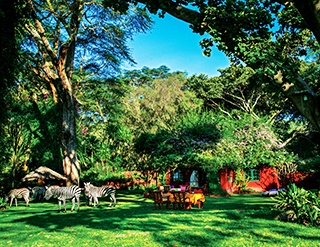 Olerai House, Naivasha, Zebras, Elephant Watch Portfolio, Nairobi, Kenya, wild safaris, wildlife safaris, wildlife, safaris, conservation