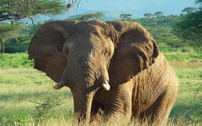 My Favourite Elephants