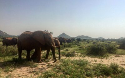 Internship at Elephant Watch Camp-Home Away from Home