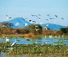 experience, Lake Naivasha, Great Lakes, Olerai, Naivasha, wildlife, Elephant Watch Portfolio, Nairobi, Kenya