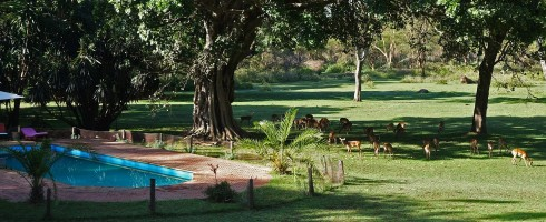 Olerai, Olerai House, Naivasha, sanctuary, Lake Naivasha, Elephant Watch Portfolio, Nairobi, Kenya, Great Lakes, Great Rift Valley, activities, experience, wild safaris, wildlife, Big Five, wildlife safaris, swimming pool, impala, swimming, pool