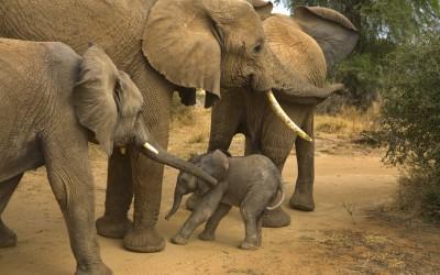 Our Wild Life in Samburu